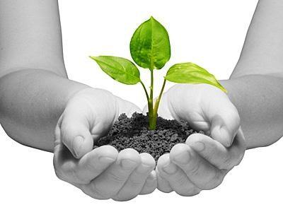 sustainability.jpg.opt400x300o0,0s400x300